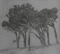 Pine trees, Cape Town 2 by Kannemeyer, Anton