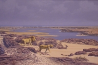 Desert lions - Skeleton Coast by Augustinus, Paul