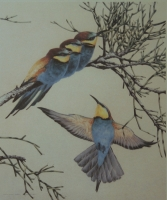 European bee-eater by Ord Kerr, David