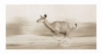 Kudu running by Springer, Graham