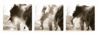 Elephant shower triptych by Springer, Graham