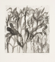Lilies by Findlay, Bronwen