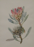 Protea by Van Goch, Joan