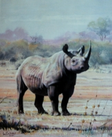 Rhino by Fisher, Julian