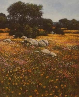 Early Flowers In Namaqualand by Meyer, John