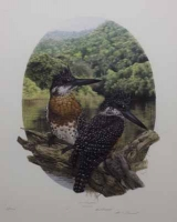 Giant Kingfisher by Darroll, Gail