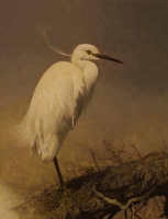 Little Egret by Harris Ching, Raymond