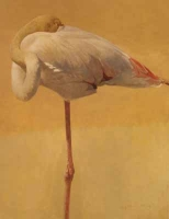 Greater Flamingo by Harris Ching, Raymond