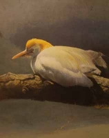 Cattle Egret by Harris Ching, Raymond