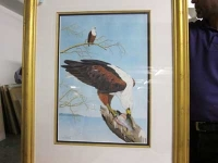 Fish eagle by Newman, Ken